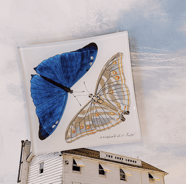 Bensgarden.com | Blue Butterfly Pair Decoupage Glass Tray - Bensgarden.com