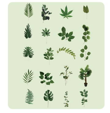 40PCS Hot Plants Pet Stickers