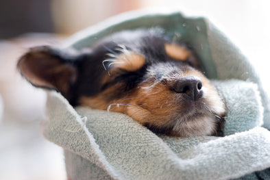 3 Ways an Ultrasound can keep your pet safe this winter