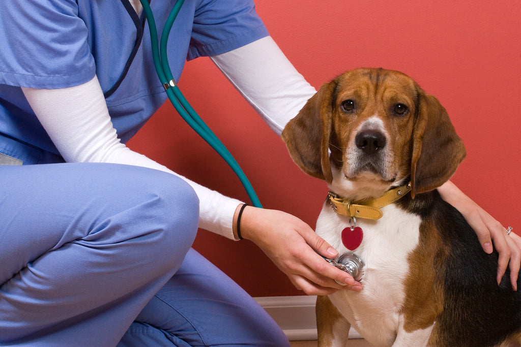 A Simple Guide to Open Your Own Veterinary Practice