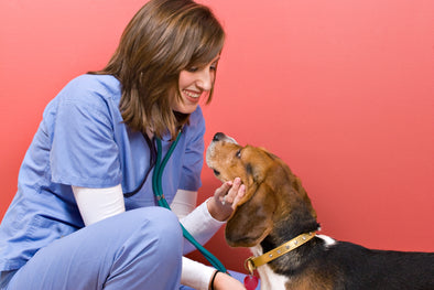 5 Tools Every Veterinarian Should Have