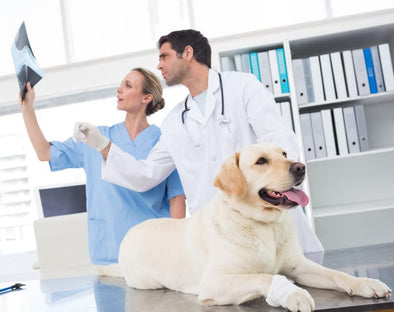 Maintain Your Veterinary Ultrasound Machine | KeeboVet