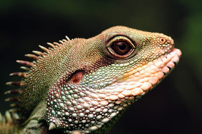 Ultrasound Use For Reptiles On The Rise | KeeboVet Ultrasound Machines Blog