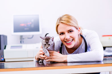 How to Choose the Right Veterinarian