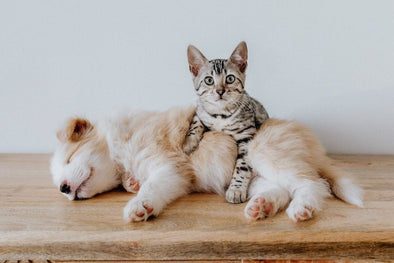 Cats Vs Dogs in Veterinary Ultrasound Care | KeeboVet Blog
