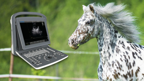 Demo Veterinary Ultrasound Sale