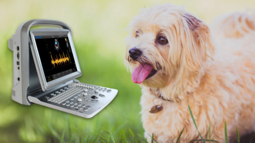 Buy Refurbished Veterinary Ultrasounds