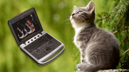 Affordable Used Veterinary Ultrasounds