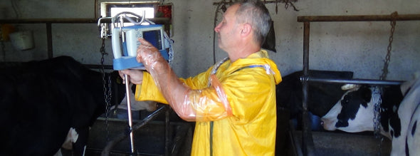 Veterinarian Using KeeboMed Palm Ultrasound KX5100V For Bovine Exams
