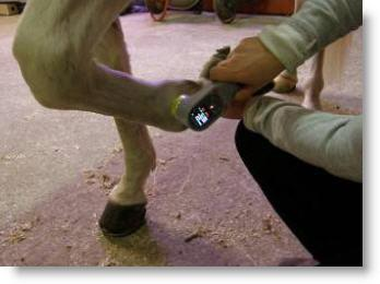 KeeboVet Veterinary Ultrasound Equipment Equine Laser Therapy unit KM-20