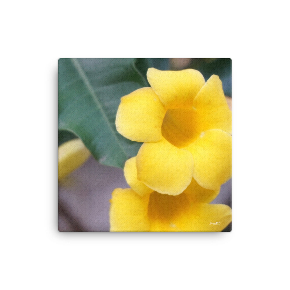 Yellow Allamanda