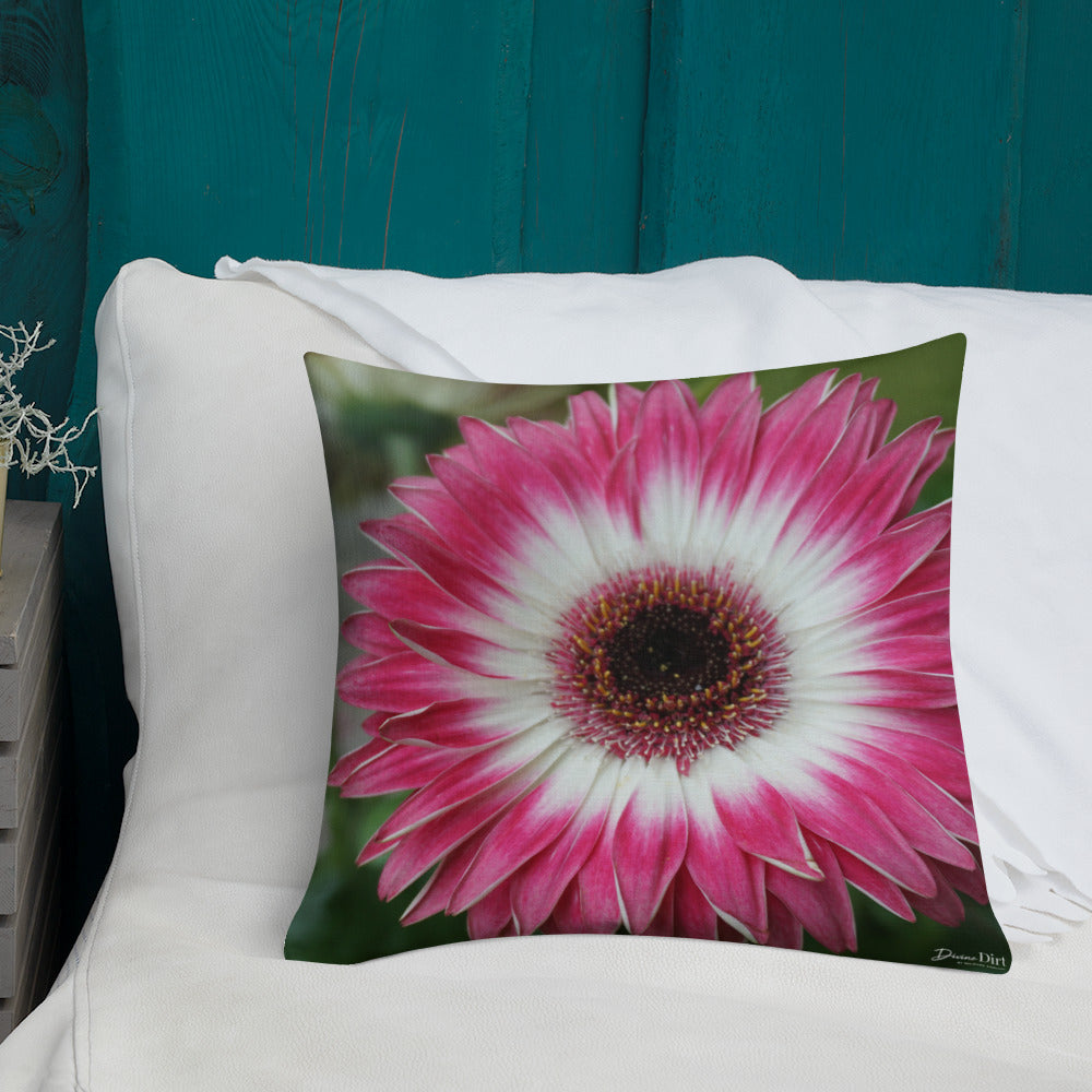 Gerbera Daisy Premium Pillow with White Back