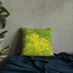 Sedum Angelina Stonecrop with White Back Premium Pillow