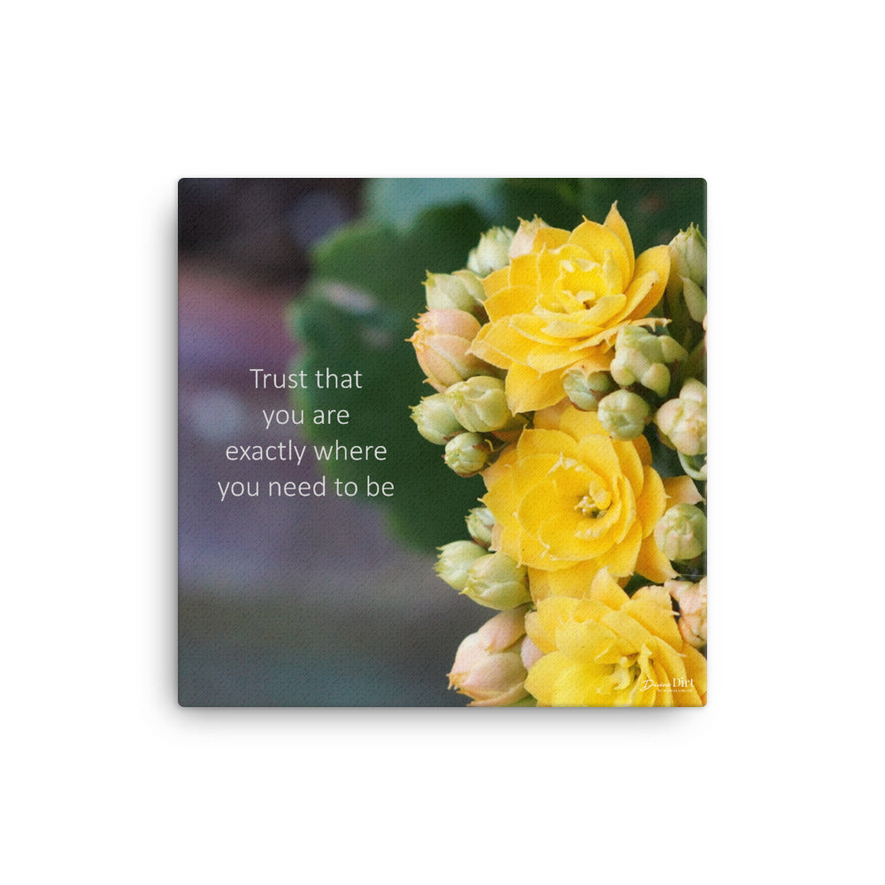 Kalanchoe_Yellow (Trust that you are exactly where you need to be)