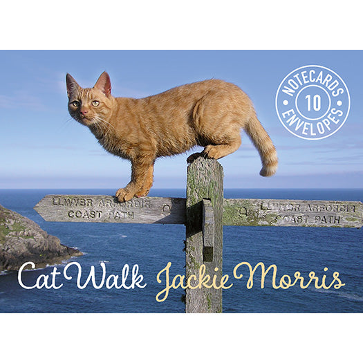 Cat Walk 10 Notecards Pack