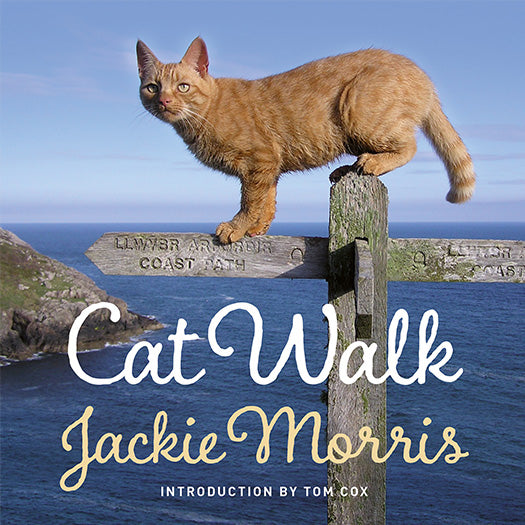 Cat Walk Jackie Morris Tom Cox published by Graffeg