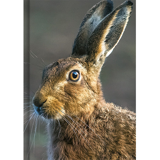 The Hare Notebook