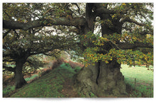 Load image into Gallery viewer, Heritage Trees Wales