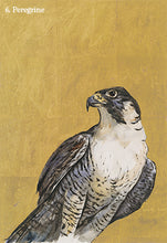 Load image into Gallery viewer, Peregrine by Jackie Morris