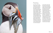 Load image into Gallery viewer, Puffins (Pocket Series)