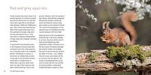 Load image into Gallery viewer, The Red Squirrel Book