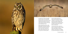 Load image into Gallery viewer, The Owl Book