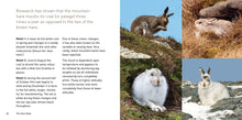 Load image into Gallery viewer, The Hare Book