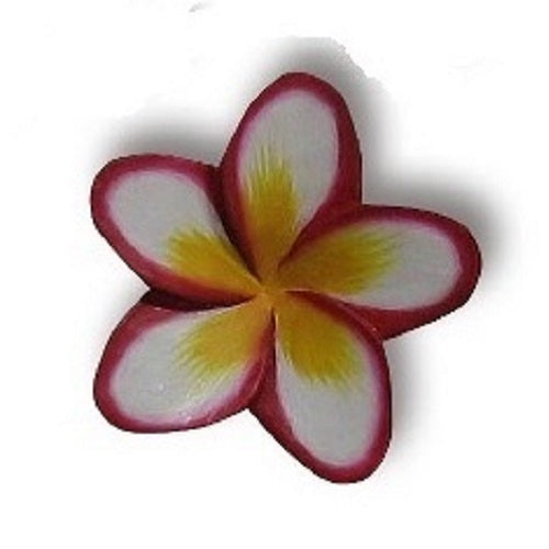 Painted Frangipani - Just-Oz