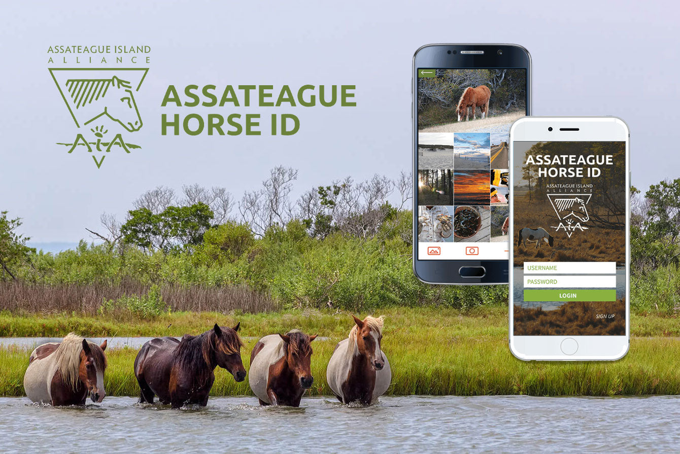 Assateague Horse ID App