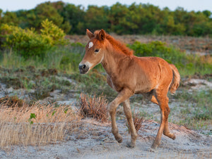 Assateague Nature Photography Spring Workshop