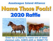 Load image into Gallery viewer, Name Those Foals RAFFLE