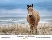 Load image into Gallery viewer, The Horses of Assateague - 2021 Calendar