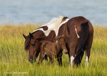 Load image into Gallery viewer, Assateague Nature Photography Workshop