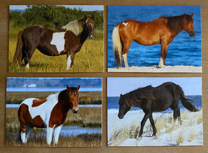 Limited Edition Assateague Horse Trading Cards Series 1