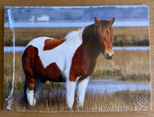 Load image into Gallery viewer, Limited Edition Assateague Horse Trading Cards Series 1
