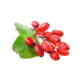 Indian barberry Ingredient Image