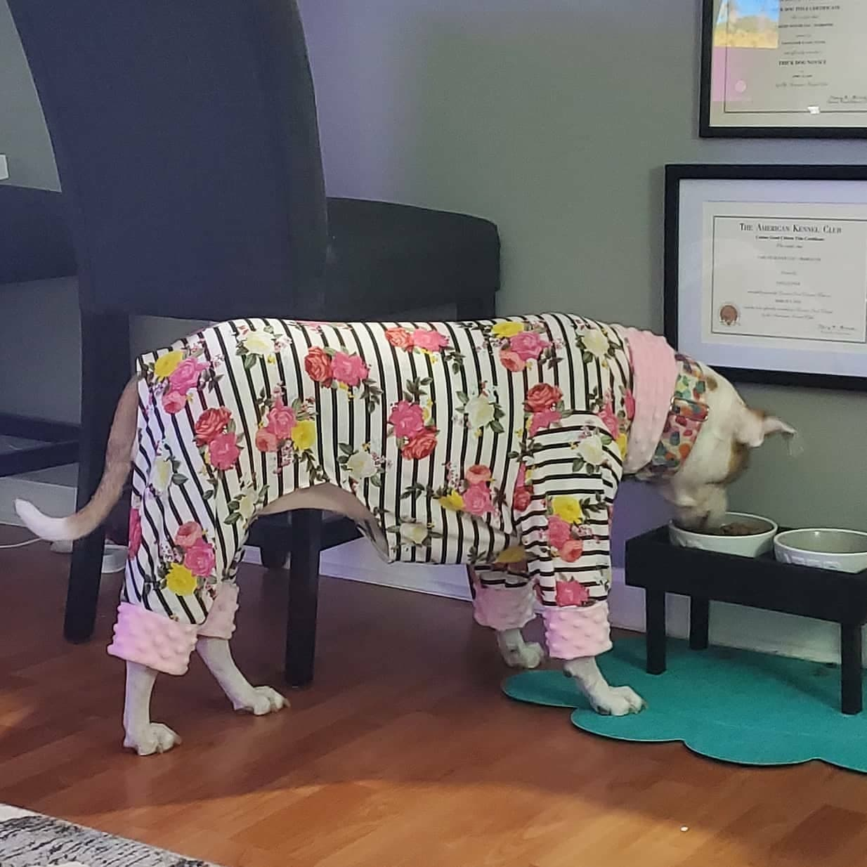 Striped Rose Dog Pajamas (Large Dogs)