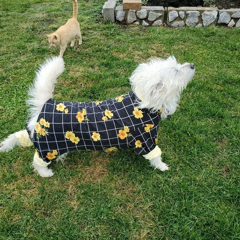 Yellow Hibiscus Dog Pajamas (Large Dogs)