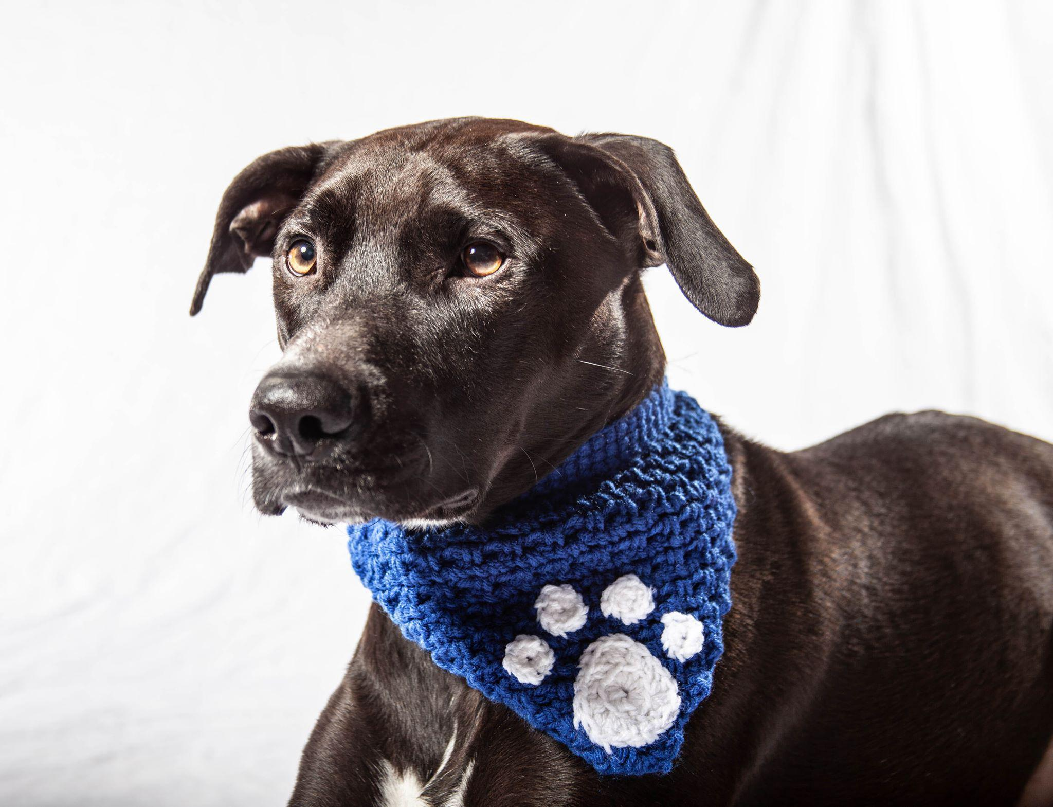 Embellished Crochet Bandanna-Go Local Pets