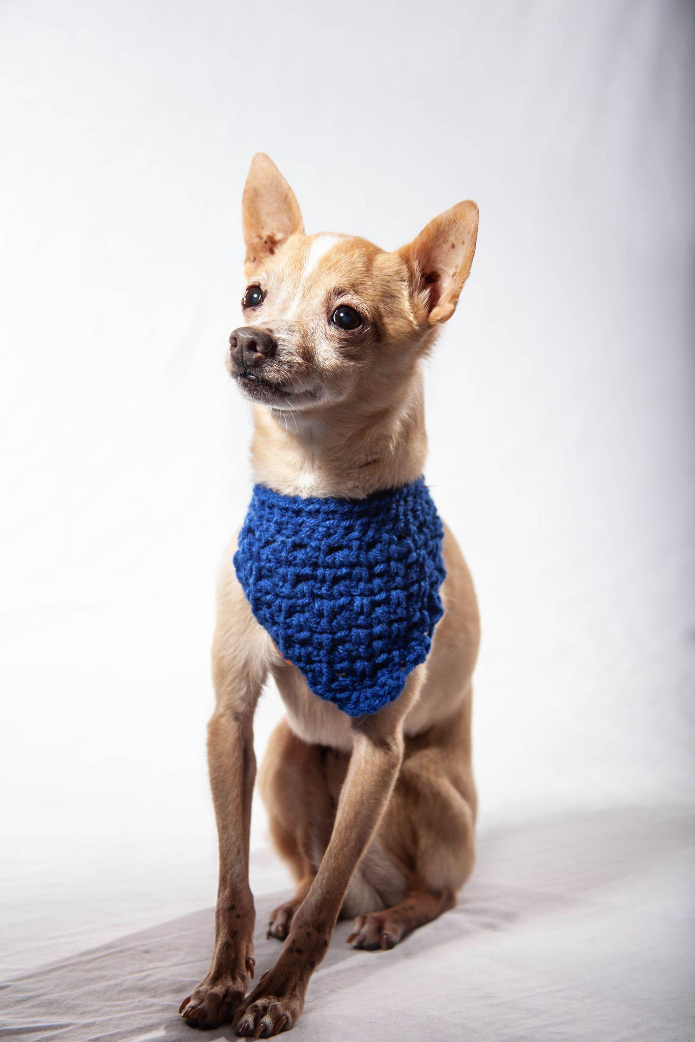 Plain Crochet Bandanna-Go Local Pets