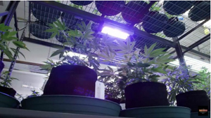 LED Grow Light- SolarSystem 550 Veg