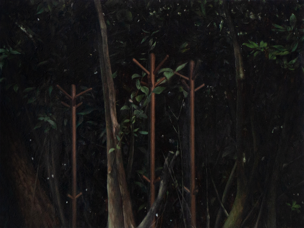 'GROUP PORTRAIT OF TREES'-LINGRUI ZHANG-SAINT MAISON