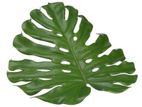 "18"" Monstera Placemat  Green (pack of 6)"