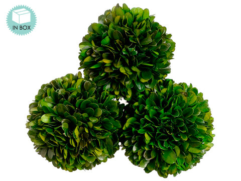 "4.3""D Preserved Boxwood Ball (3 ea/acetate box) Green (pack of 6)"