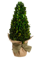"16.5"" Preserved Boxwood Topiary in Terra Cotta Burlap Pot Green (pack of 4)"