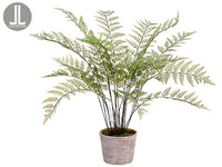 "35"" Fern in Clay Pot  Green (pack of 1)"