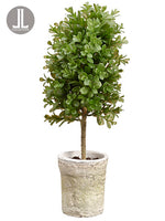 "16"" Boxwood Topiary in Clay Pot Green (pack of 8)"