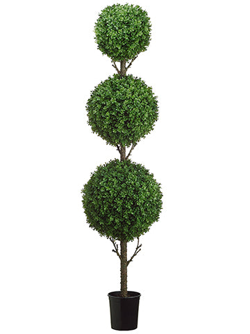 5.5' Tri Ball Boxwood Topiary in Black Plastic Pot Green (pack of 1)