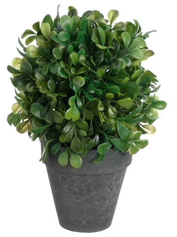 "7"" Boxwood Ball in Paper Mache Pot Green (pack of 6)"