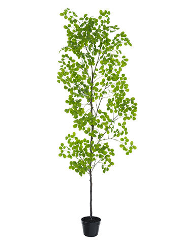 "98"" Peperomia Tree in Plastic Pot Green (pack of 1)"